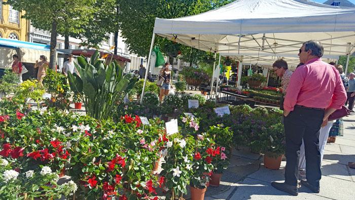Markt op zondag te Gent